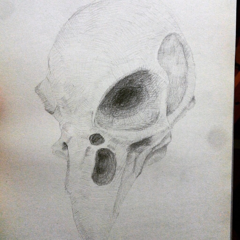 Bone structure study, pencil drawing. free hand