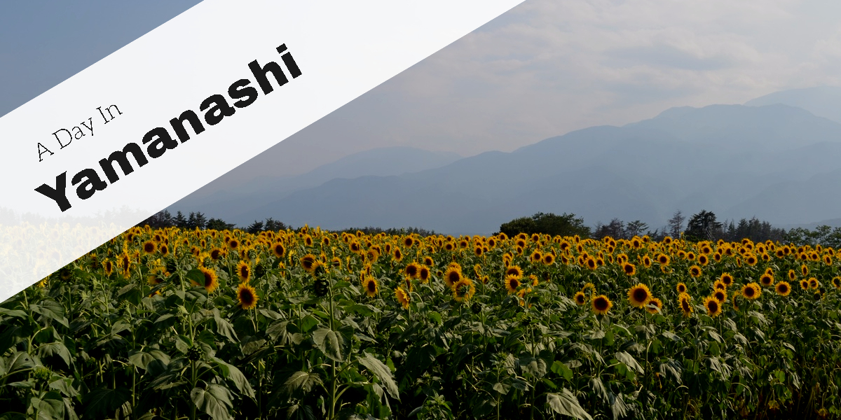 A Day In Yamanashi – Visit The Sunflower Field